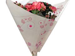 Hzn 52x65x12cm Opp50 Triple Organic roze
