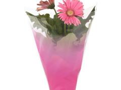 Hzn 35x35x12cm  CPP40mu + LG Usual roze