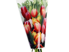 Hzn 40x30x12cm  OPP40mu Tulip mix full color