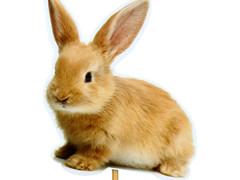 Bijsteker konijn foto foam 8x8cm+50cm stok