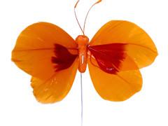 Bijsteker Butterfly 8cm+12cm draad 48 stuks oranje