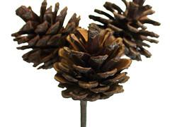 Bijsteker Dennenappel 3x 3,5cm+50cm stok naturel