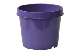 Melissa Dark Purple