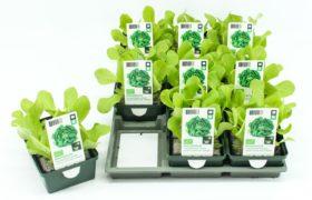 Presentatie en milieubelasting Tuin op Tafel-groenteplantjes sterk verbeterd door nieuwe verpakking