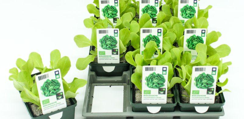 Tuin op Tafel-groenteplantjes - Van Krimpen