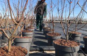 Van Krimpen introduceert nieuwe boomcontainer in opdracht van kweker