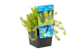 Vijvermand 11×11 met waterplant en etiket